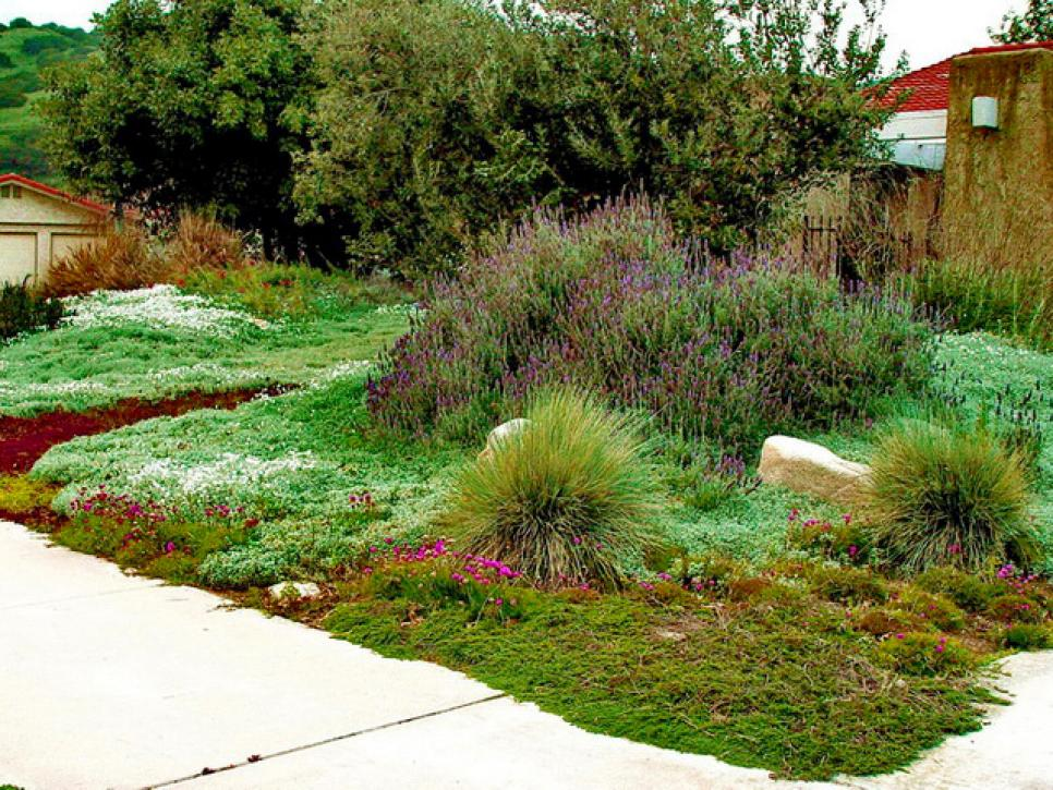 Plants To Use As Lawn Alternatives