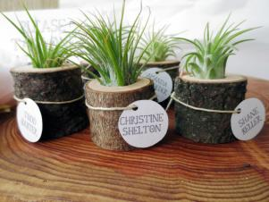 CI-thisfineday_wood-and-airplant-wedding-favors_s4x3