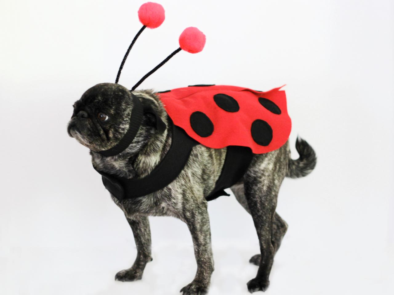 diy ladybug halloween costume for dogs | how-tos | diy
