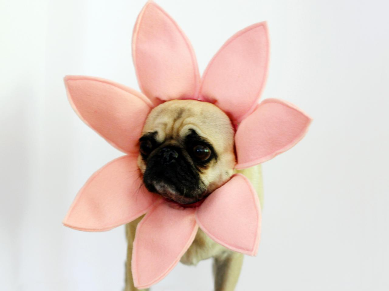Diy Flower Halloween Dog Costume How Tos Diy