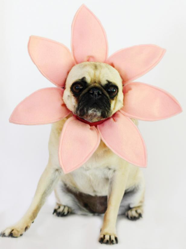 Diy flower halloween dog costume how tos diy ci carla wikinghalloween dog costume flowerv solutioingenieria Image collections
