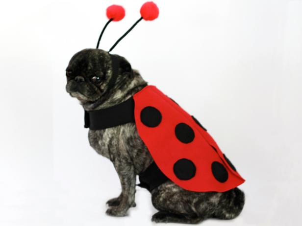CI-Carla-Wiking_Halloween-Dog-in-lady-bug-costume_h