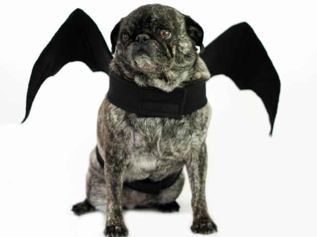 Diy bat wings halloween dog costume how tos diy ci carla wikinghalloween dog costume bat wingsh solutioingenieria Image collections