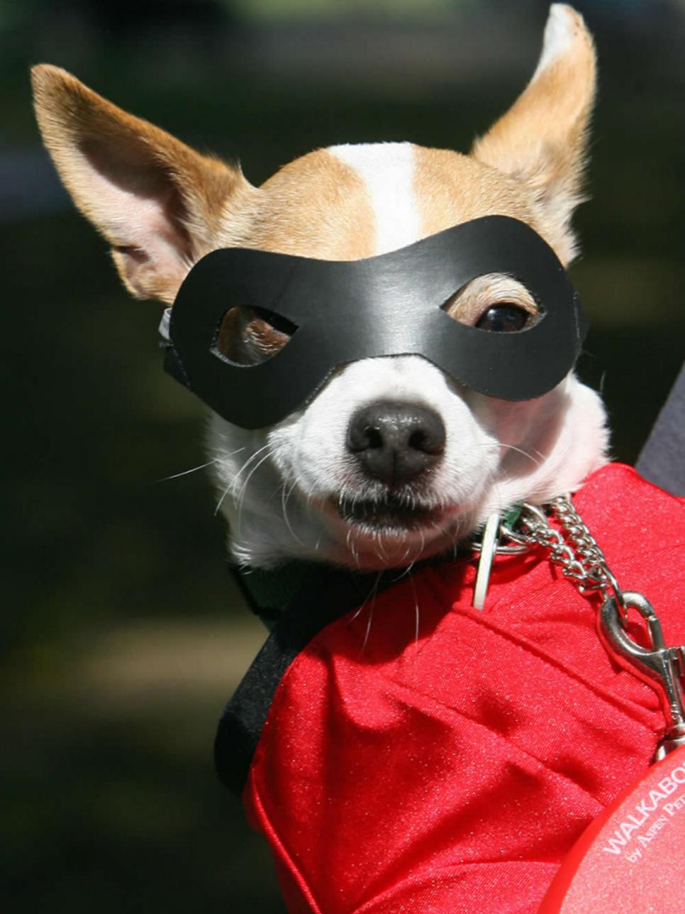 Halloween costume ideas for dogs and cats diy be witchingly adorable solutioingenieria Images