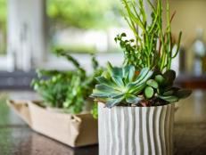 Learn how to care for succulents, plus get decorating ideas for making wreaths, centerpieces and even wedding bouquets.