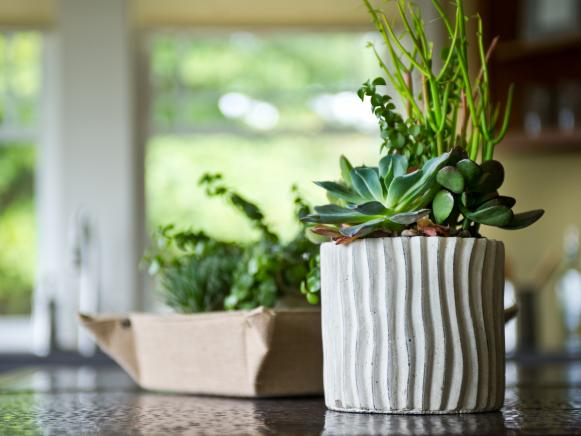 Succulent Plants in Kitchen