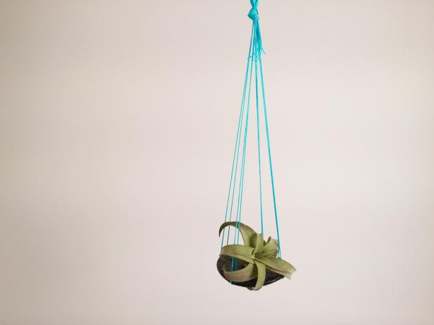 DIY Airplant Hanger