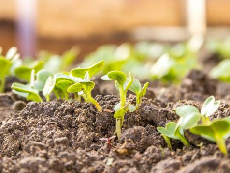 Save Money on Your Veggies: Grow From Seed