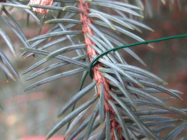 How to Secure and Maintain Your Christmas Tree