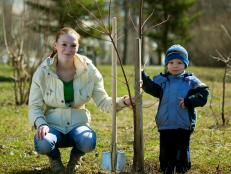 Find out how trees make your life better, then go out and plant at least one this weekend.