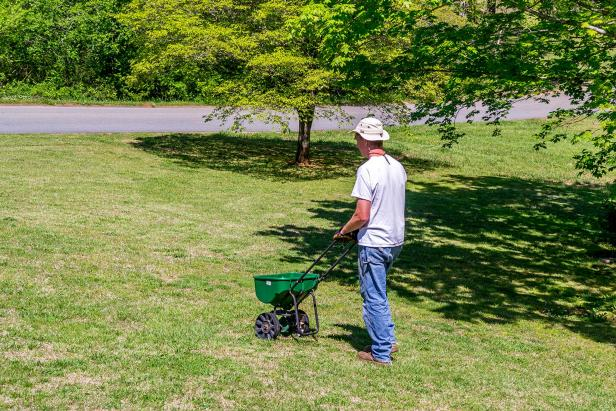 Man Pushing Spreader on Lawn