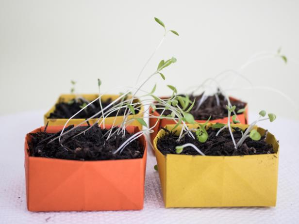 How to make paper seed starters