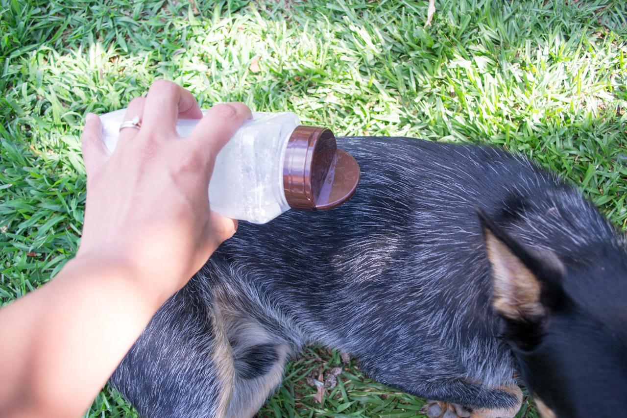 How to Make Dry Dog Shampoo | DIY Network Blog: Made + Remade | DIY