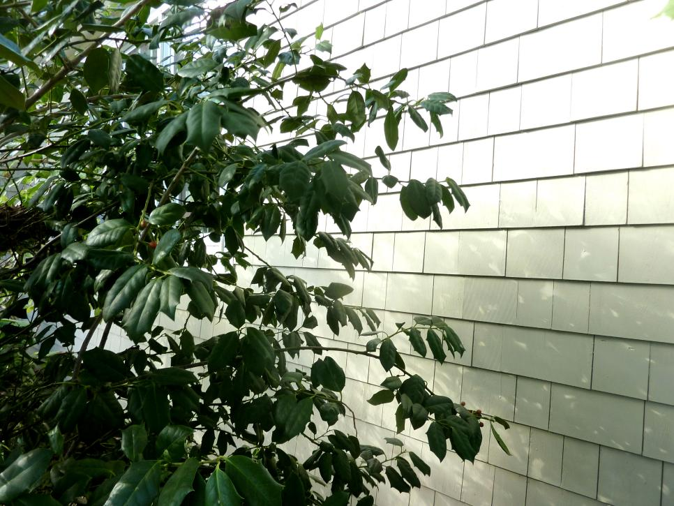 6 Must-Do Outdoor Spring Home Maintenance Tasks | DIY