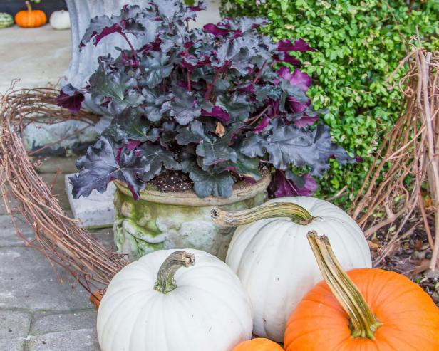 Black Heuchera With Pumpkins