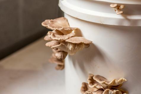How to Grow Mushrooms Indoors | DIY