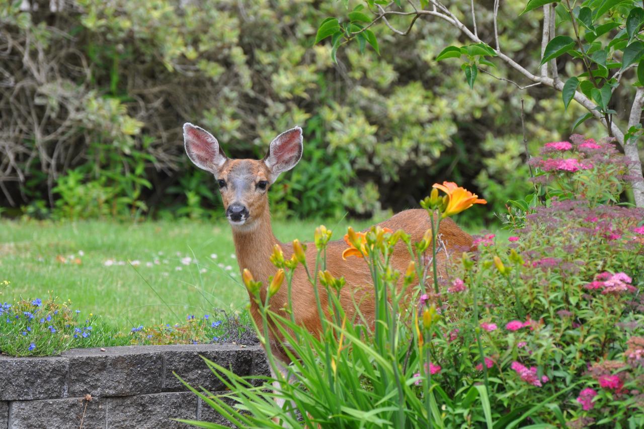 Do Deer Eat Hostas Diy