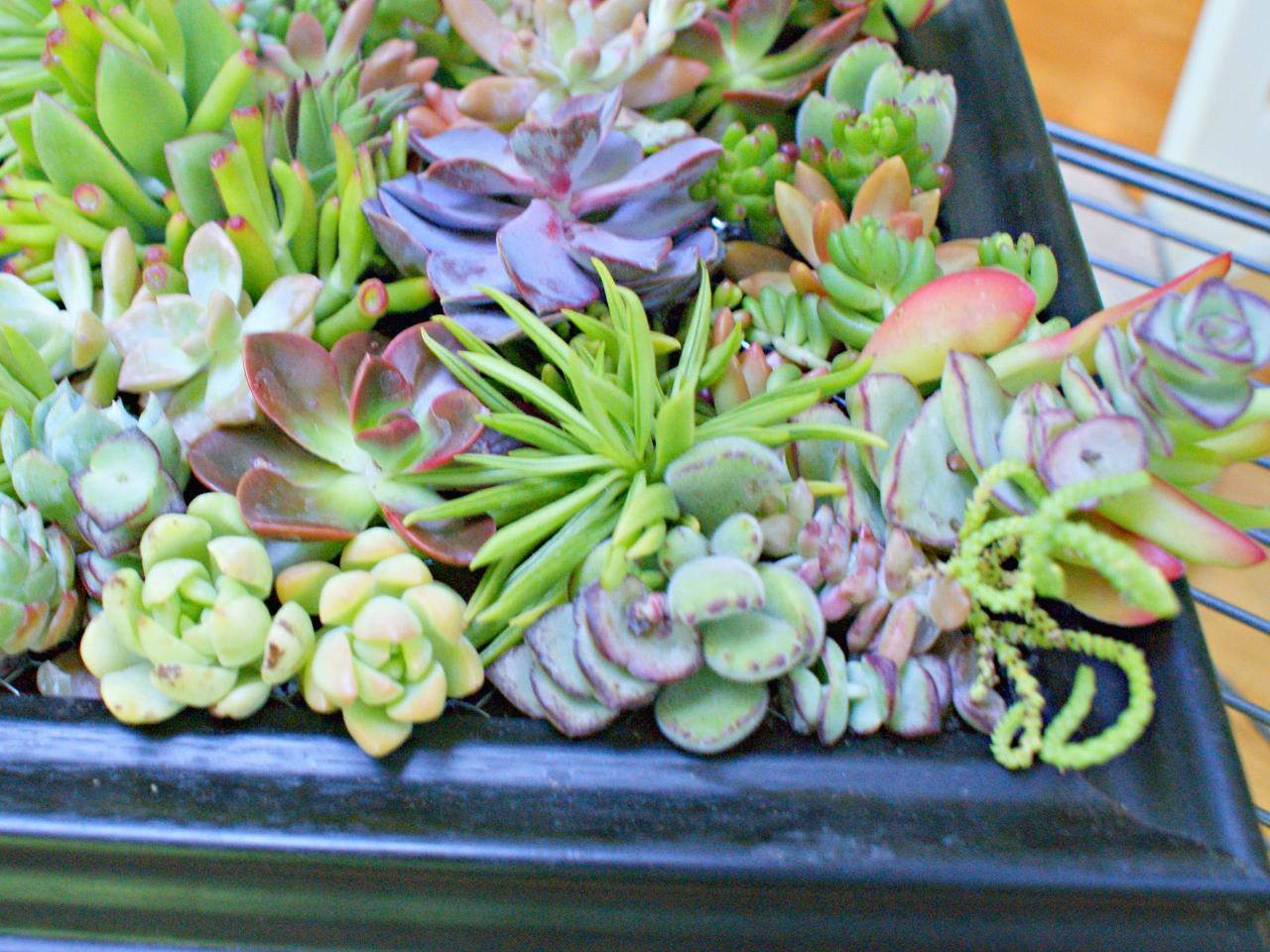 How To Make A Succulent Garden Shadowbox Diy